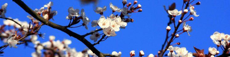 cropped-blossom2.jpg