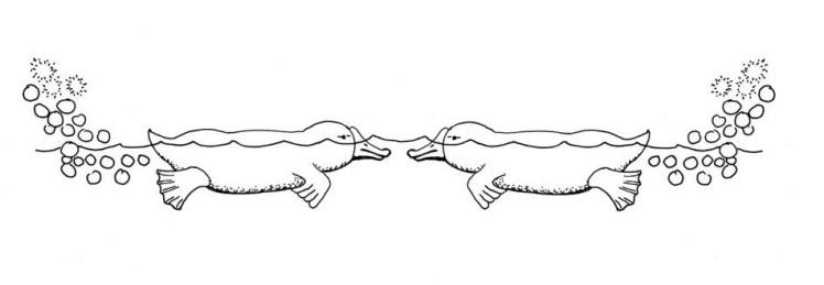 Duckbilledsplatterpusmirror